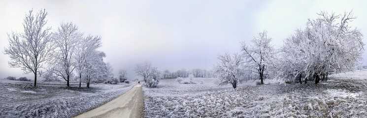 Path between frost-covered trees, Eichstaett, Bavaria, Germany, Europe
