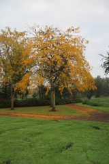 Autumn leaves in several colors in The Netherlands