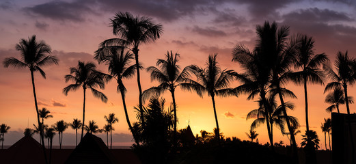 Silhouette sunset tropical palm trees hawaii. Summer travel holidays photo from sea ocean water cloudy at Big Island, USA