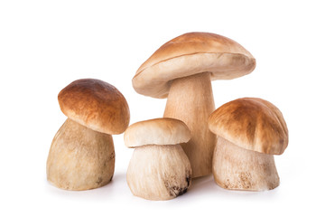 Fresh Mushrooms family