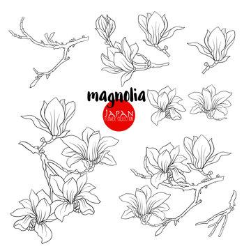 Branch of magnolia blossoms, Stock line vector illustration bota