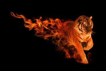 tiger animal kingdom collection with amazing effects Wall mural