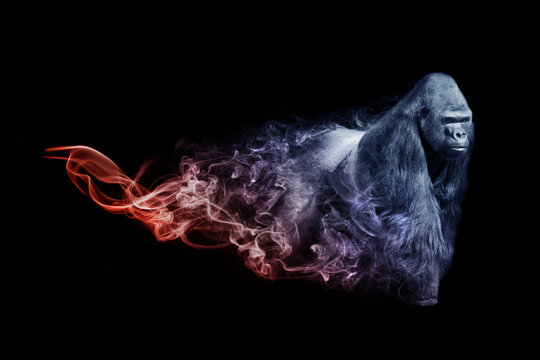 Gorilla animal kingdom collection with amazing effect