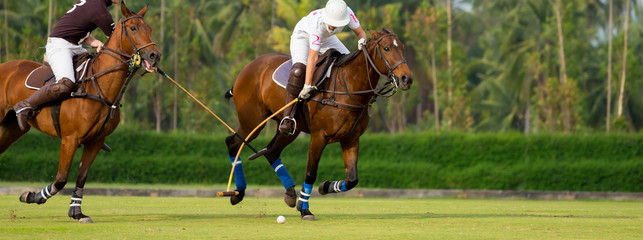 Horse Polo Player protect