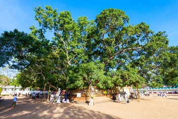 Bo Tree, Kataragama Temple