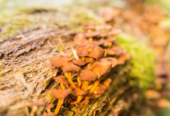 Pilze auf dem stamm im Wald im Herbst