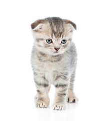 tabby kitten standing in front view. isolated on white background