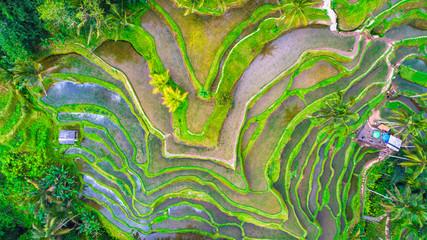 Rice terraces. Bali, indonesia.