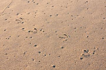 Seagull Tracks in Wet Sand