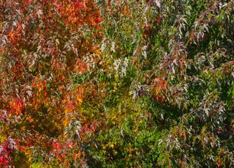 Rainbow of Autumn foliage