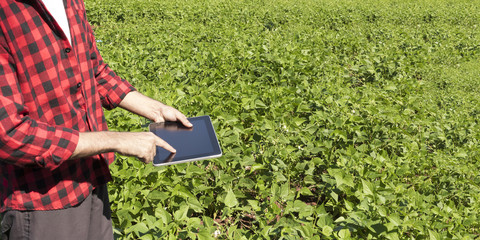 Farmer using digital tablet computer in cultivated soybean field plantation. Modern technology application in agricultural growing activity. Concept Image.