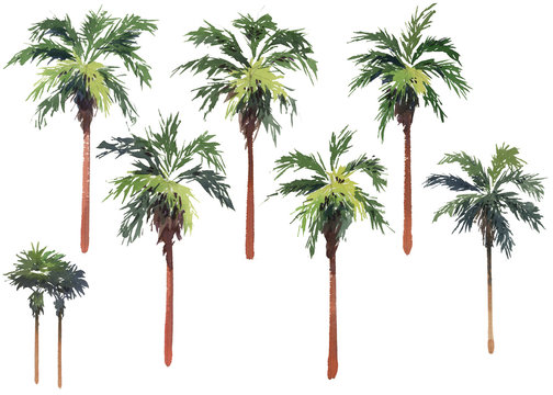 Multiple individual palm trees