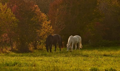Indian summer and horses on a sunny autumn day in Bavaria