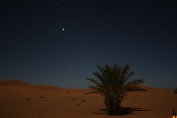 Sterne über der Wüste