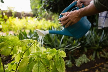 Mid-section of couple watering plants with watering can in