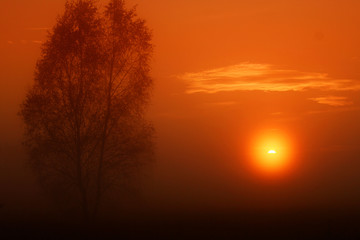 tree standing alone on a foggy mist and a nice orange sunrise Fotomurales
