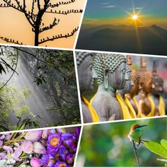 Collage of Sri Lanka images - travel background (my photos)