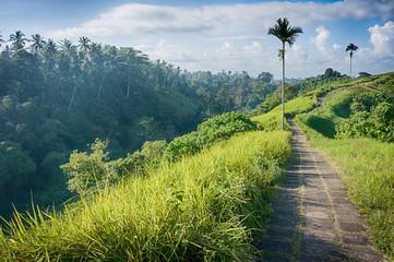 The Campuhan ridge walk in Ubud