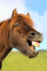 The horse neighs