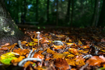Autumn leaves fall on Forest Fungi in beautiful sunlight
