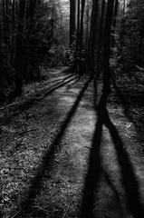 Dark forest trail in Porvoo national urban park Finland