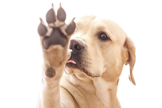 Tease Puppy