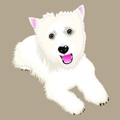 Vector color  illustration of west highland white terrier.