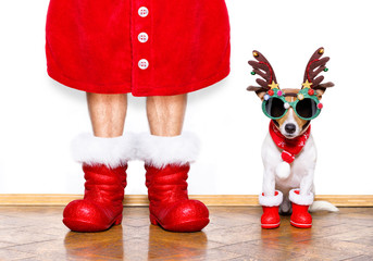 christmas santa claus dog