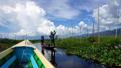 jardins flottants du lac Inlé