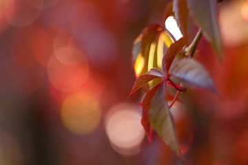 Colorful colors of autumn, colorful leaves of trees in the background.