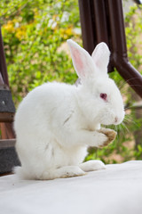 Cute white rabbit looks at you