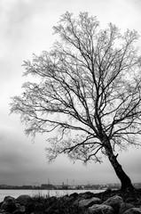 Dry leafless tree autumn sea shore Helsinki Finland