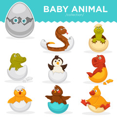 Baby animals hatch eggs cartoon pets hatching vector flat isolated icons