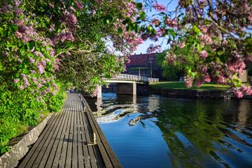 Siren is blooming violet in Suomenlinna Unesco Words Heritage