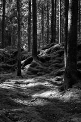 Dark nordic forest near Helsinki Finland