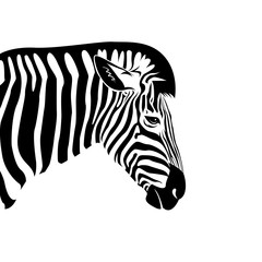 Vector of an Zebra head on a white background. Wild Animals.