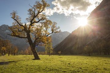 Großer Ahornboden, Tirol, Österreich