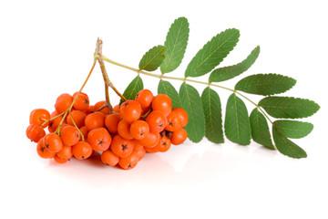 Orange rowan with leaf isolated on white background