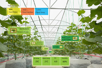 Wall Mural - Smart agriculture concept, Agronomist or farmer use Artificial intelligence and augmented reality in farm to help grow systems, saving water ,resources reduce labor time, make high yield and predict