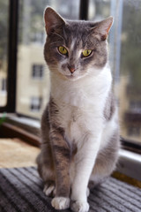 Gray striped cat looks sad at camera