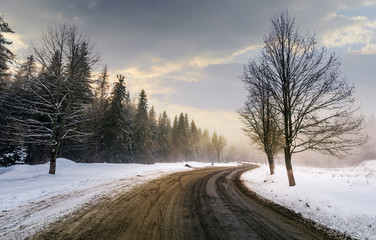 winding road through forest in winter. beautiful nature scenery with naked trees on foggy and cloudy sunrise. lovely transportation background.