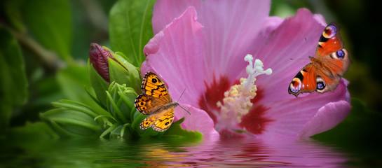 Banner mit Blüte und Schmetterlinge
