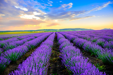 lavender field stretching to the horizon at sunset