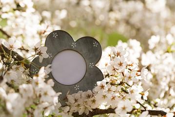 vintage photo frame with blossom cherry flower sakura