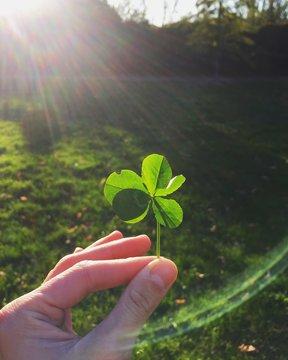 qudrifoglio con cinque foglie