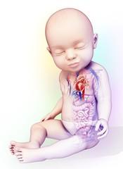 Baby's heart, illustration