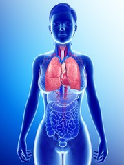 Illustration of woman's heart lung system against blue background