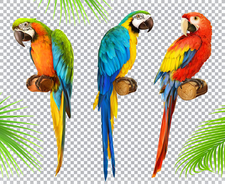 Ara parrot. Macaw. Photo realistic 3d vector icon set