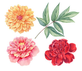 Dahlia and peony pink, red, yellow vintage flowers green leaves isolated on white background. Watercolor botany illustration.