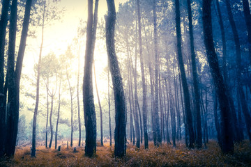 Dark mystical autumn forest in blue fog. Old Tree jungle forest landscape with foggy magic atmosphere